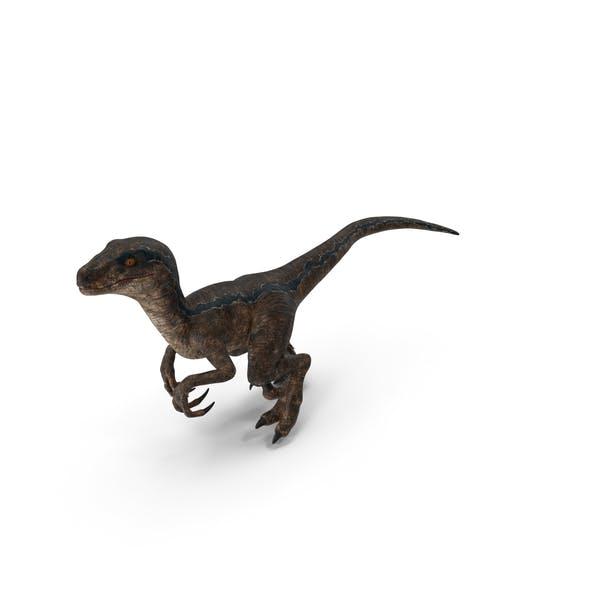 Velociraptor Walking