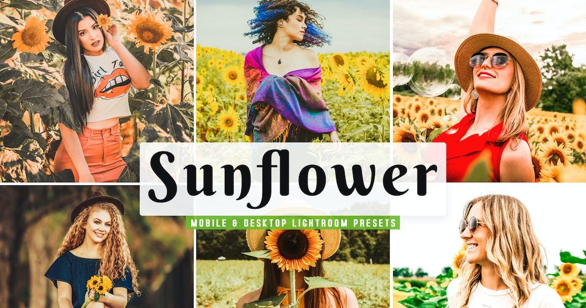 Download Sunflower Mobile & Desktop Lightroom Presets by creativetacos