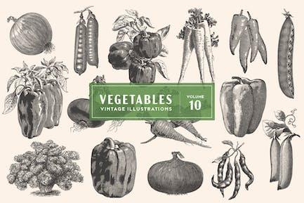 Vintage Vegetable Illustrations Vol. 10
