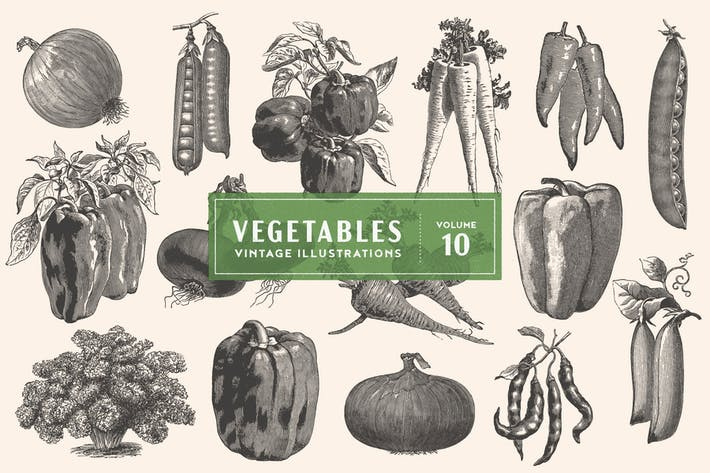 Thumbnail for Vintage Vegetable Illustrations Vol. 10
