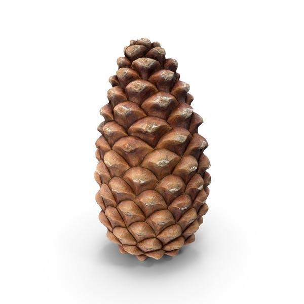 Closed Pine Cone