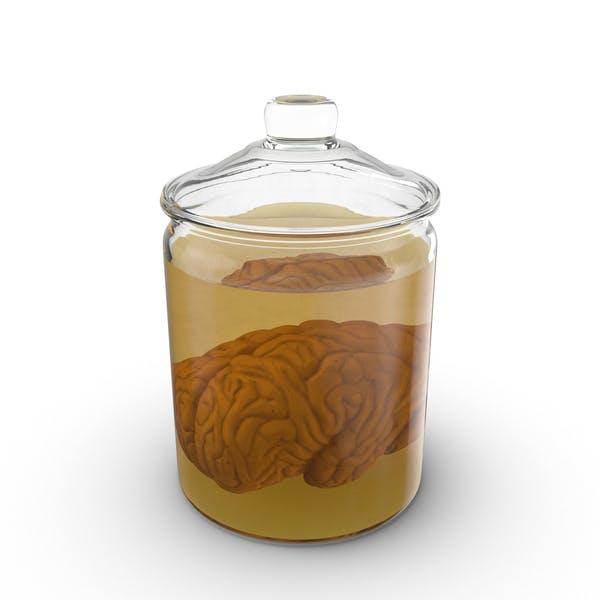 Vintage Jar with Brain