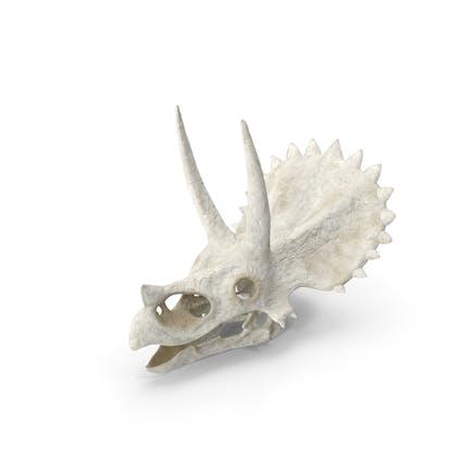 Cráneo de Triceratops