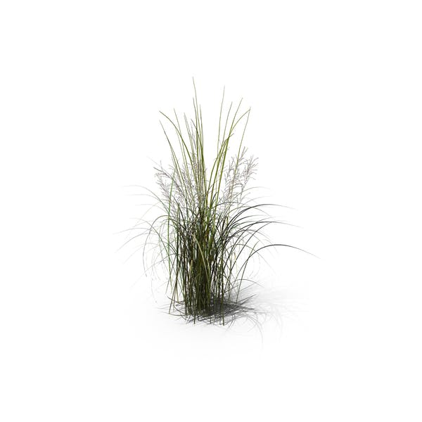 Thumbnail for Tall Moor Grass
