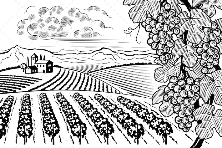 Thumbnail for Vineyard Valley Landscape Black And White