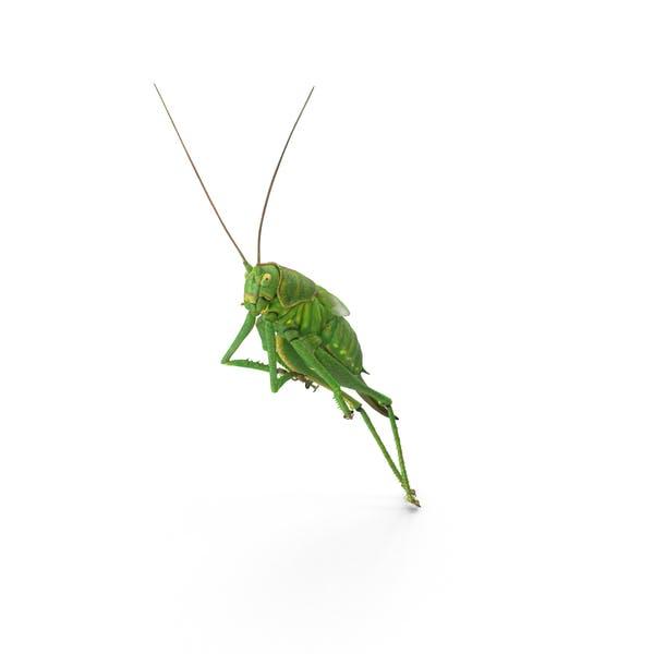Cover Image for Grasshopper