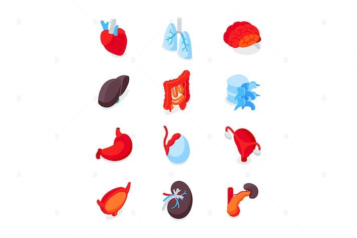Human Internal Organs - Isometric Icons Set