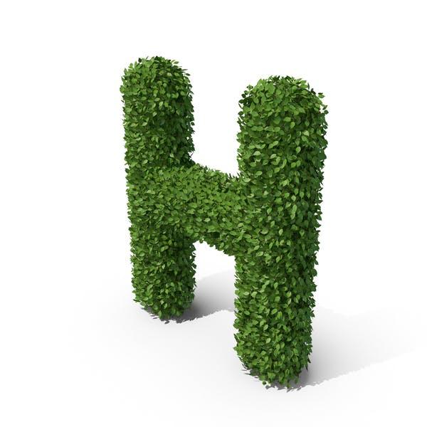 Thumbnail for Heckenbuchstabe H