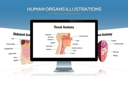 Biology - Human Organs For Keynote