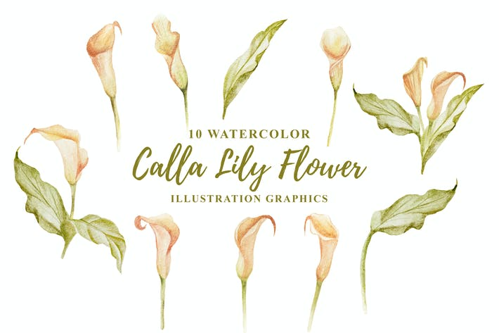 Thumbnail for 10 Watercolor Calla Lily Flower Illustration