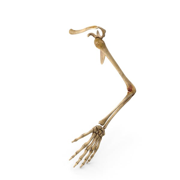 Скелет руки