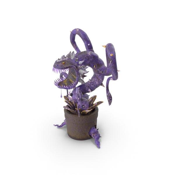 Thumbnail for Carnivorous Flytrap Plant Purple