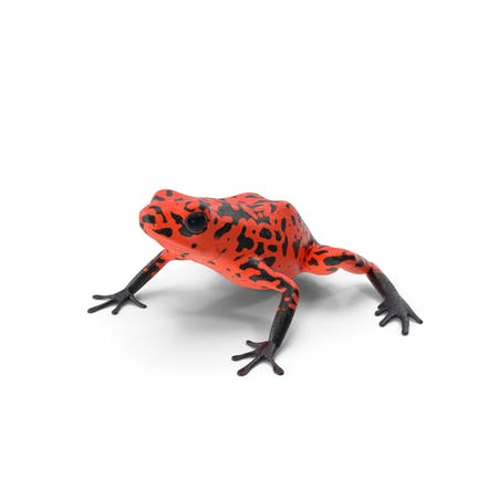 Orange Black Dart Frog