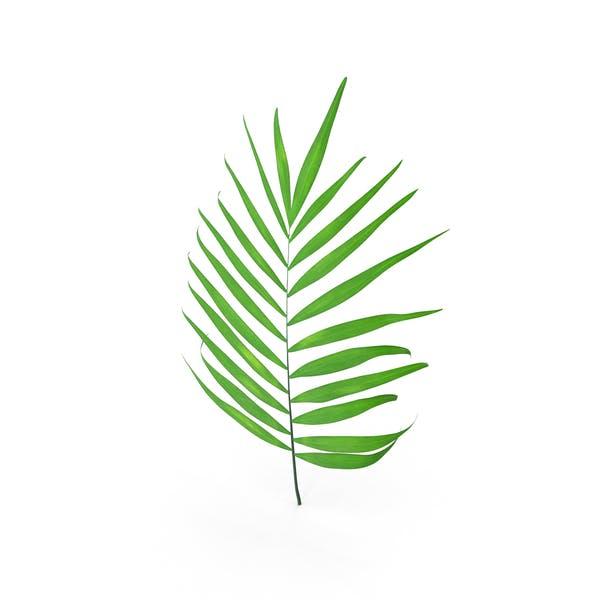 Parlour Palm Branch