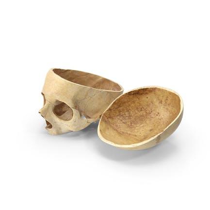 Corte de calavera humana con pieza