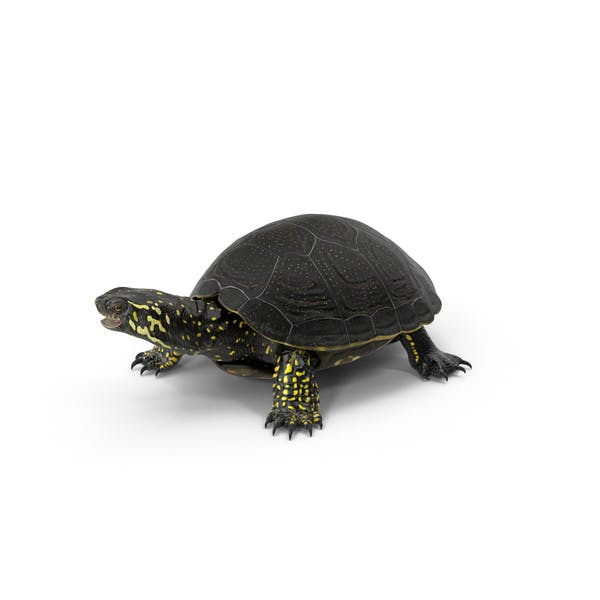 Thumbnail for Европейская пруд черепаха