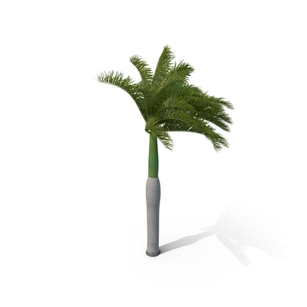 Royal Palm with Moderate Wind