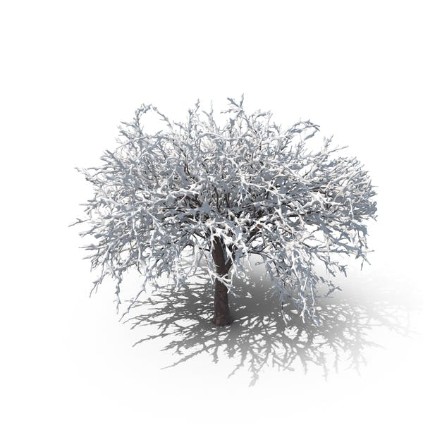 Winter Cherry Tree
