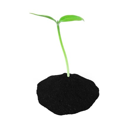 Young Plant Sprout