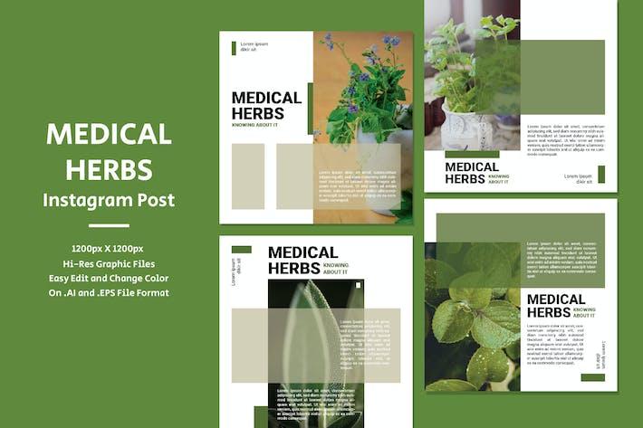 Thumbnail for Medical Herbs