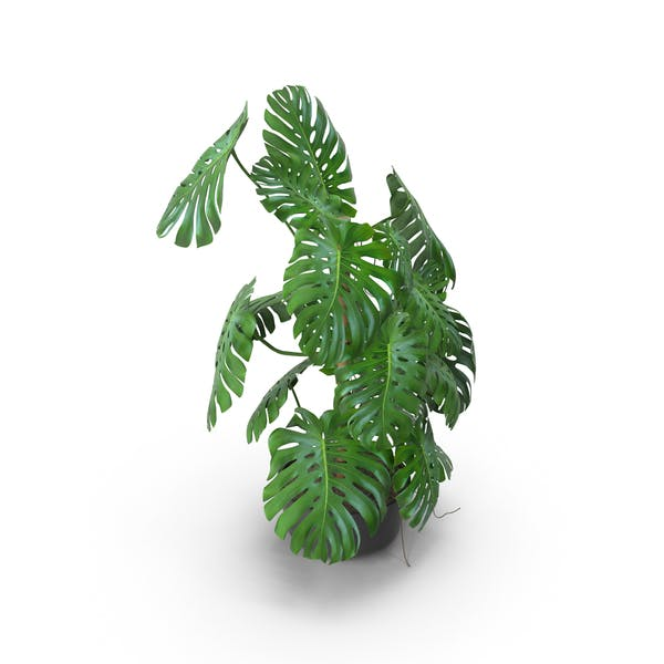 Thumbnail for House Plant