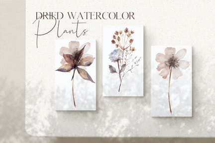 Watercolor dried plants set