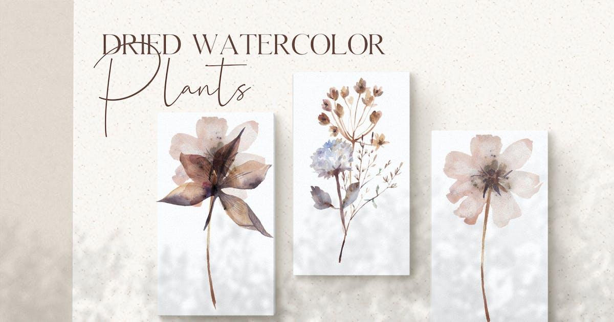 Download Watercolor dried plants set by kaleriia