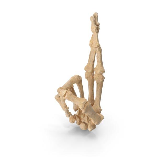 Скрещенные скелетные пальцы