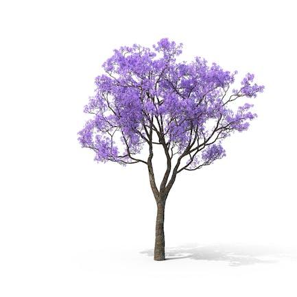 Jacaranda Azul