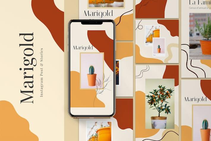 Thumbnail for Marigold Instagram Post & Stories