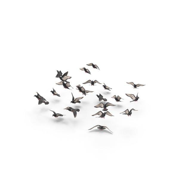 Cover Image for Aves Flocando Palomas Volador