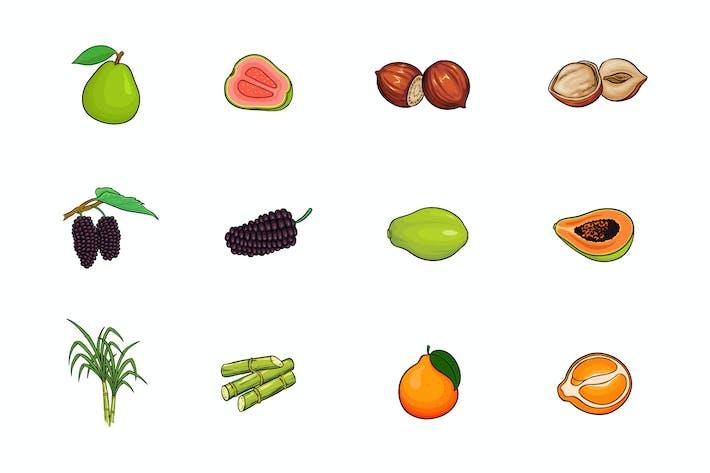 Thumbnail for Fruits Illustration V.5