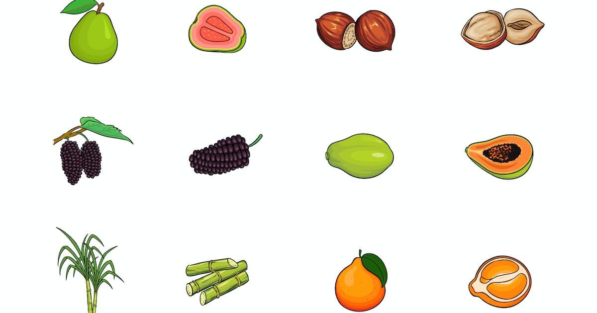 Download Fruits Illustration V.5 by deemakdaksinas