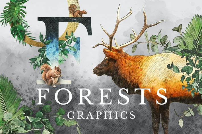 Cover Image For Forest Illustrations Graphics Kit