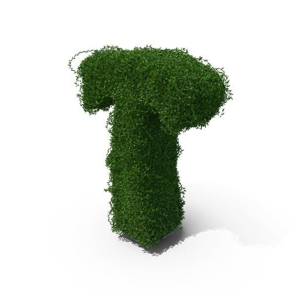 Boxwood Symbol T
