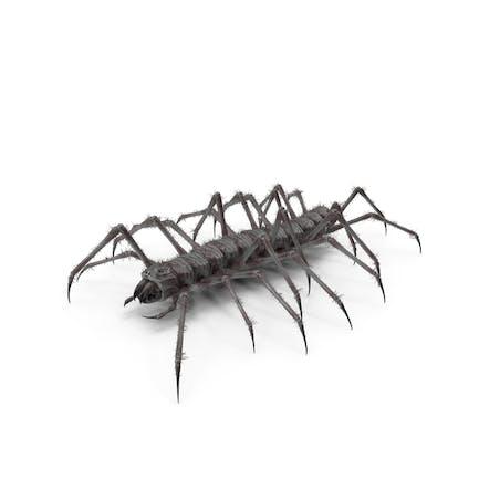 Monster Hundertfüßer Schwarz