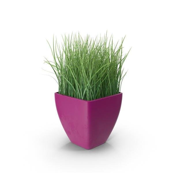 Трава в фиолетовый плантатор