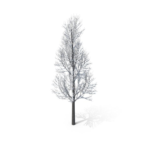 Thumbnail for Winter Tree