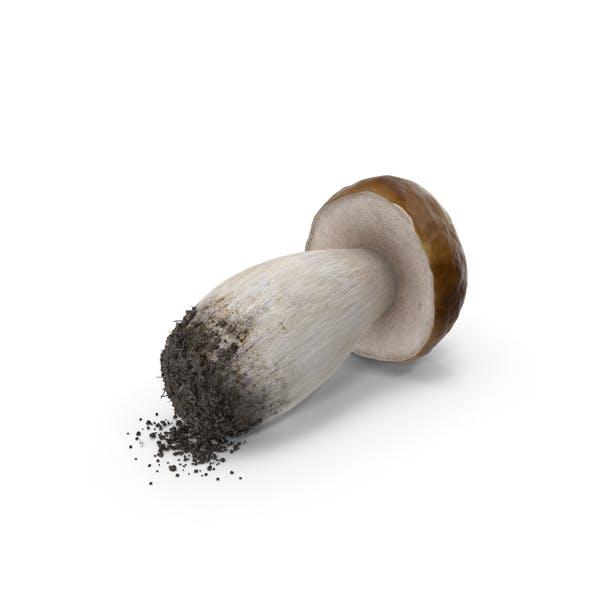 Thumbnail for Penny Bun Mushroom