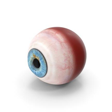 Realistische blaues menschliches Auge 4K Textur