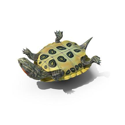 Teich Schieberegler Schildkröte