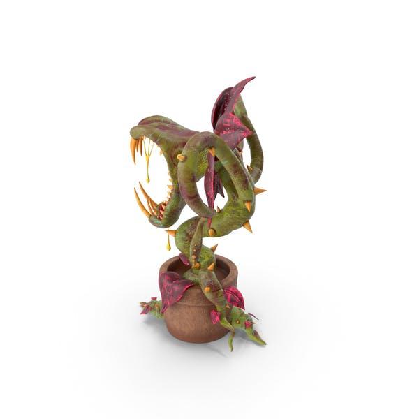 Thumbnail for Carnivorous Plant