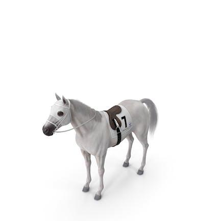 Racehorse White Fur