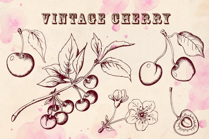 Thumbnail for Vintage Cherry