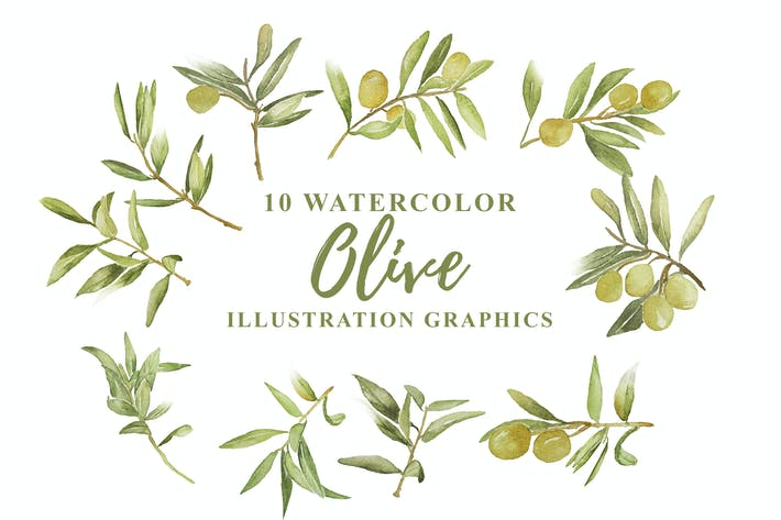 Thumbnail for 10 Aquarell Olive Illustration Grafiken