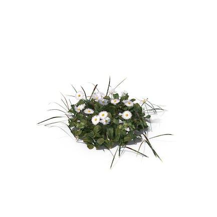 Pflaster von Gras und Blumen