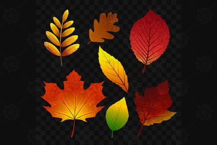 Autumn leaves - vector realistic isolated clip art