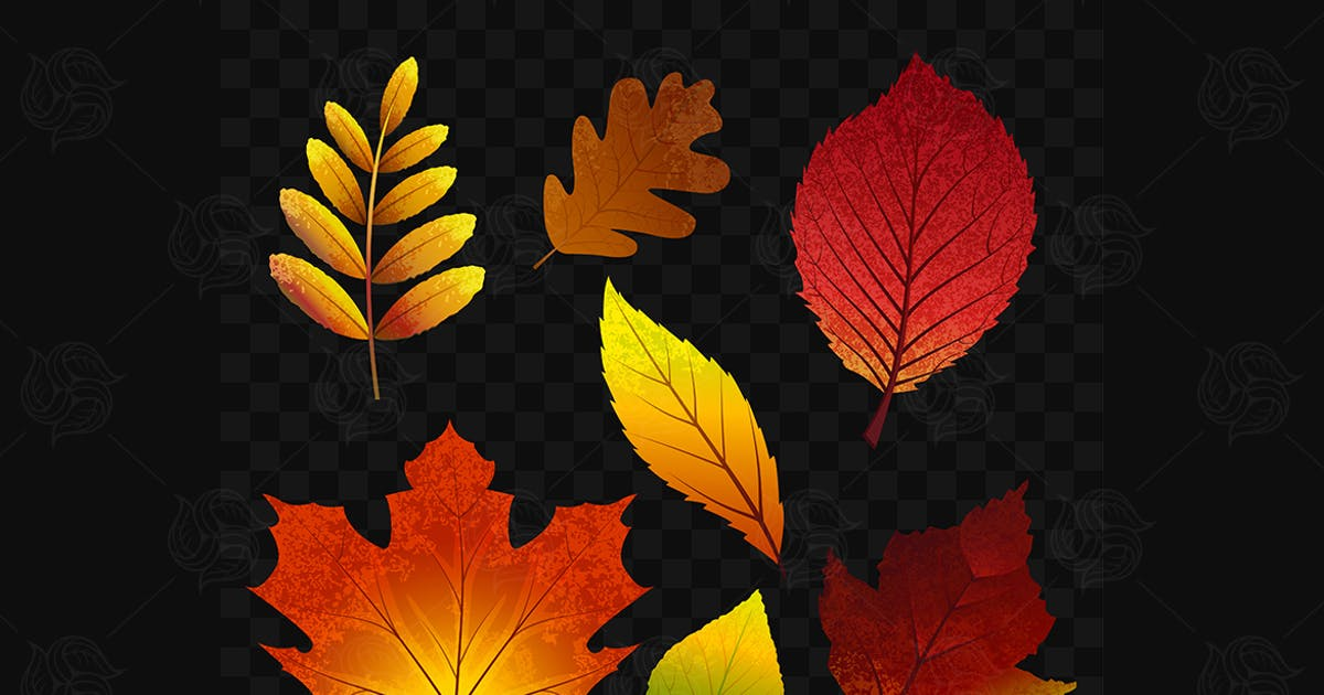 Download Autumn leaves - vector realistic isolated clip art by BoykoPictures