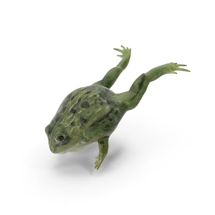 Pixie Frog Jumping