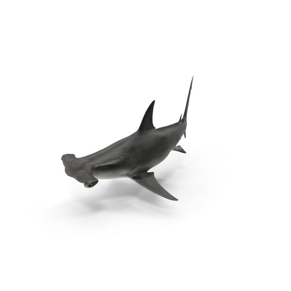 Thumbnail for Great Hammerhead Shark